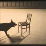 Still: Ruben Bellinkx, Musical Chair 2007 Three dogs act like a chair is an enemy. Filmed from three positions 2007